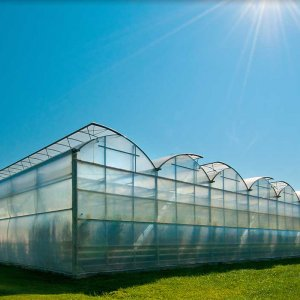 Need to Expand Greenhouse Cultivation