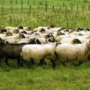 Livestock Exports Up