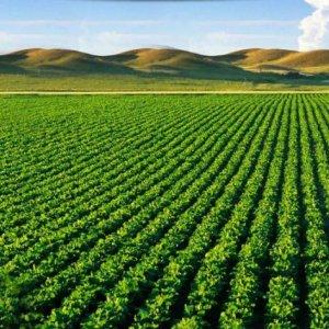 Crop Science Congress in Rasht