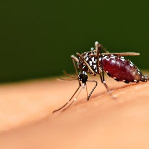 Six African Nations Could be Malaria-Free by 2020