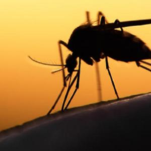 Zika Virus Gets Scarier