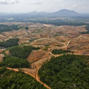 Top Palm Oil Supplier Dropped