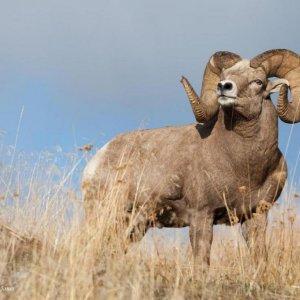 Poachers in DOE Crosshairs