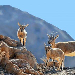 Ranger Shortage Hurting Conservation Efforts