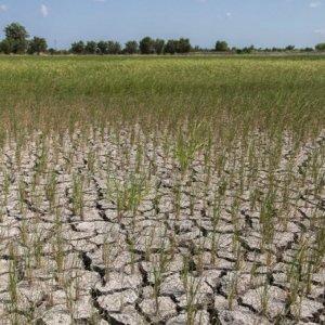 Fars Rice Farmers Warned