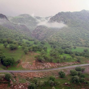 Now Woodworms  Dare Zagros Forests