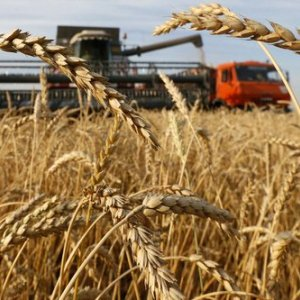 Russia, Canada  Leapfrog US in Wheat Export