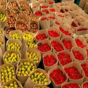 Call for Flower Export  to Regional Markets