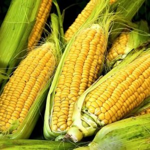 Corn Imports From Ukraine