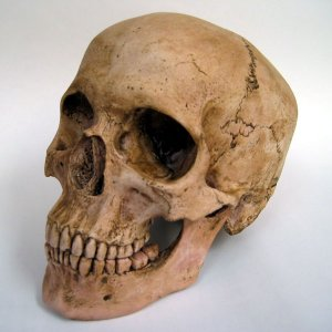 Ancient Skull Unearthed in Tehran