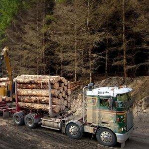 NZ Trade  Deficit Softens