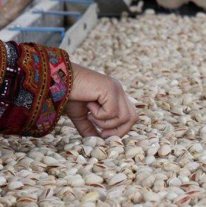 Rise in Iran's Pistachio Exports
