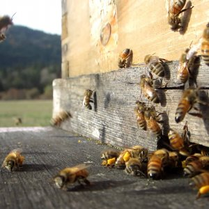 Iran, UNIDO Sign MoU on Beekeeping