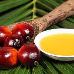 Sharp Fall in Palm Oil Imports