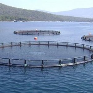 Cage Fish Farming Reaches 20kT