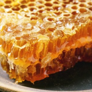 Foreign Co. May Invest in Honey Production
