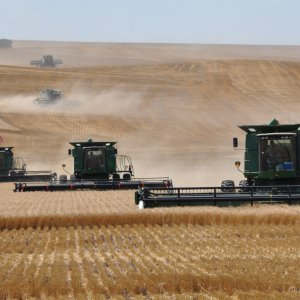 Gov't Buys More Wheat From Local Farmers