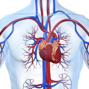 Cardiovascular Congress