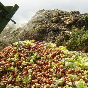 Food Waste in US Appalling