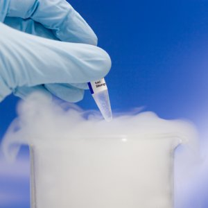 Freezing Fertility