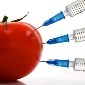 GM Foods Tested