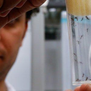 Ebola, Zika Push Global Health Leaders to Cooperate