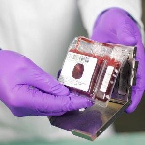 Royan Cord Blood Bank