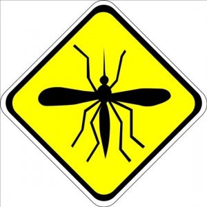 Yellow Fever Could Spread, Charity Warns