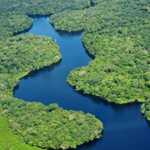 Amazon Basin Drought Stunts Earth's Lungs