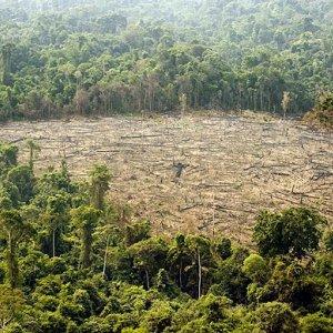 Deforestation Surges in Brazil