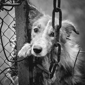 Online Campaign Demands Criminalizing Animal Abuse