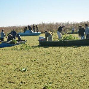 Water Hyacinth Pose a Major Problem in Gilan