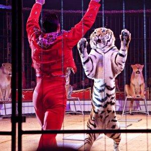 No More Circus Animals!