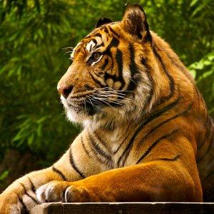 Big Beasts Facing Threat of Extinction