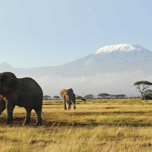 Elephant Poaching Down in Africa, Threat Still High