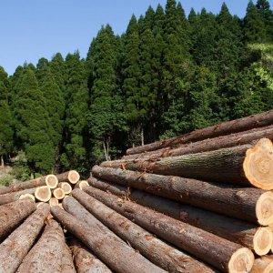 Forest Protection Needs Concerted national Effort