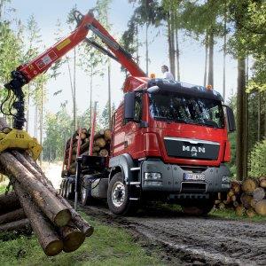 Forests Razed  as Regulations  Go Unenforced