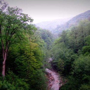 The move could cost the Caspian Hyrcanian forests the chance of being inscribed on UNESCO's World Heritage List.