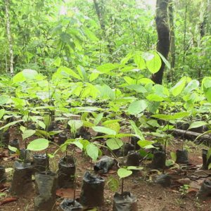 Forests Regrown in Latin America Key for Climate