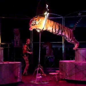 Thailand's Animal Tourism Facing Criticism, Scrutiny