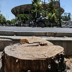 Tehran Municipality Slammed for Not Saving Iconic Trees