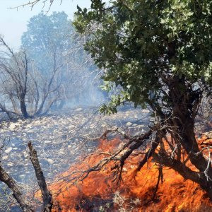 Wildfire Damage Declining in DOE-Managed Protected Zones
