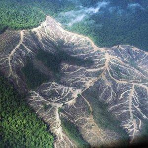 Norway Commits to Zero Deforestation