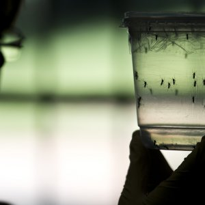 Summer Tourism May Spread Zika to Europe