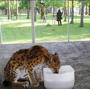 Four out of 20 zoos in Iran are not licensed.