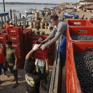 Economists Raise Brazil Inflation Outlook