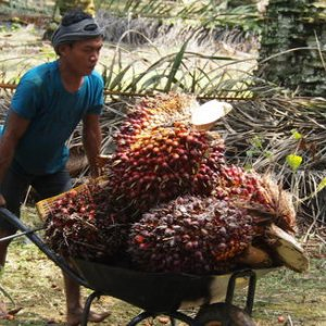 Malaysian Palm Oil Exports Rebound