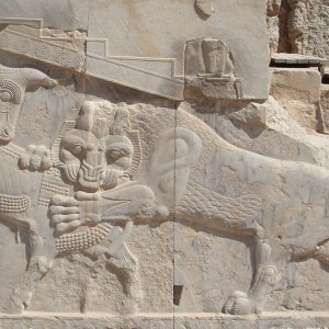 Lion and Bull: Life and Death