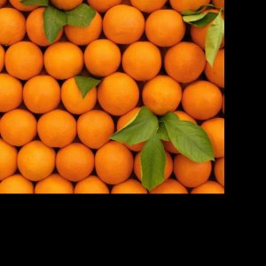Orange Production to Reach 2.5m Tons