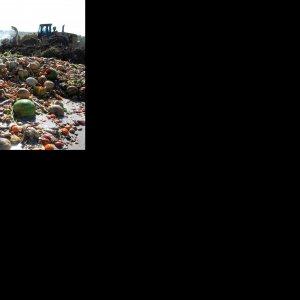 Food Waste Cost Exorbitant